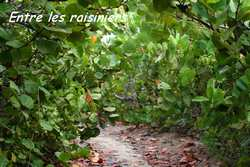 sentier Salines, pointe des chateaux, guadeloupe