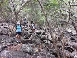 sentier rocailles, trace jaune, terre de bas, Guadeloupe