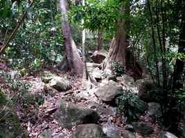 sentier rocailleux, tour du houelmont, basse terre, gaudeloupe