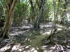 sous bois de campêches, Port Louis, grande terre, Guadeloupe