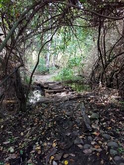 sentier dans le bois mamalier cote sous le vent Guadeloupe