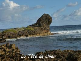tete de chien, TGT5, grande terre, Guadeloupe