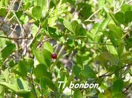tibonbon, barre de cadoue