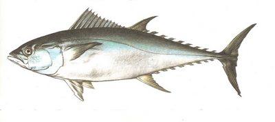 poisson, pelagos, fonds marins, ecosysteme marin, guadeloupe, antilles