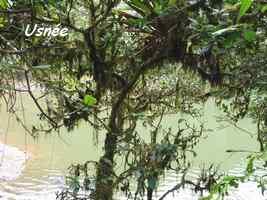 usnées, trace des étangs