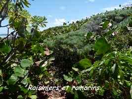 végétation, TGT4, grande terre, guadeloupe