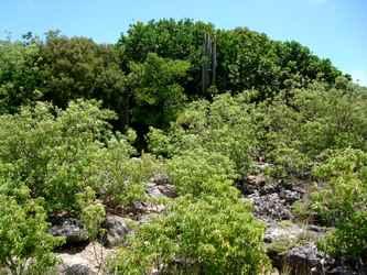 végétation rocailles Falaises Guadeloupe