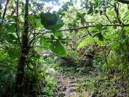 vue verdure, trace V Hugeus, B Terre