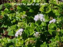 violette BdeM , TGT3, grande terre, guadeloupe