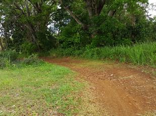 sentier à gauche mahoganis pte Bacchus Pt Bourg Guadeloupe