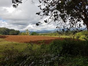 vue champ montagne pet bacchus Pt Bourg Guadeloupe