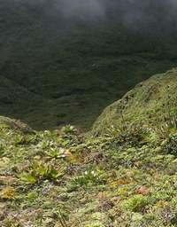 vue ravine matylis, soufrière, basse terre, guadeloupe