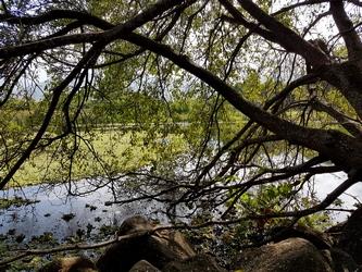 vue étang roland Mamalier cote sous le vent guadeloupe